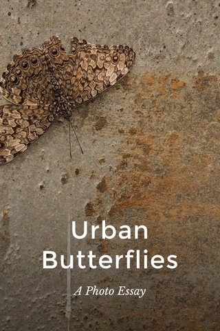 Urban Butterflies A Photo Essay