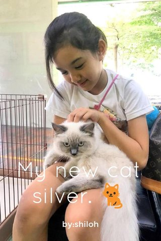 My new cat silver. 🐈 by:shiloh