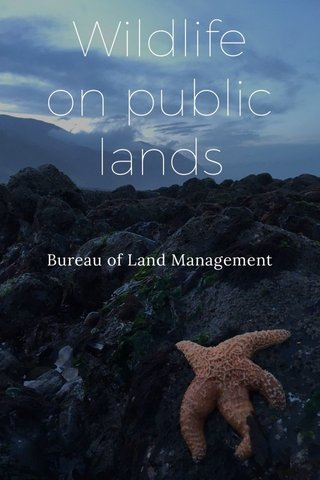 Wildlife on public lands Bureau of Land Management