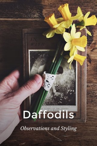 Daffodils Observations and Styling