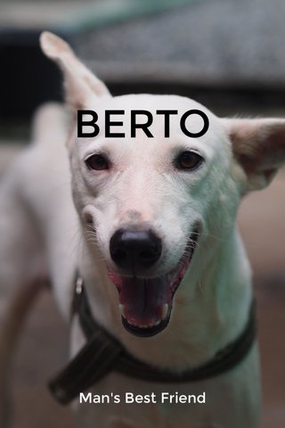 BERTO Man's Best Friend