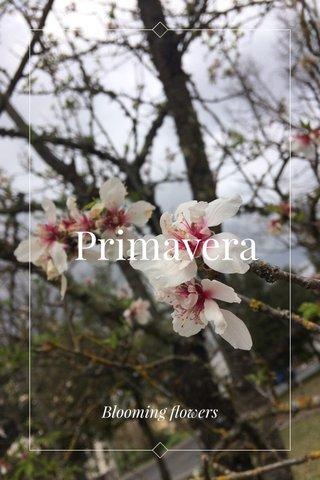 Primavera Blooming flowers