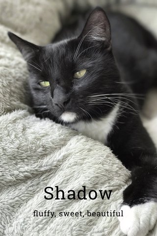 Shadow fluffy, sweet, beautiful