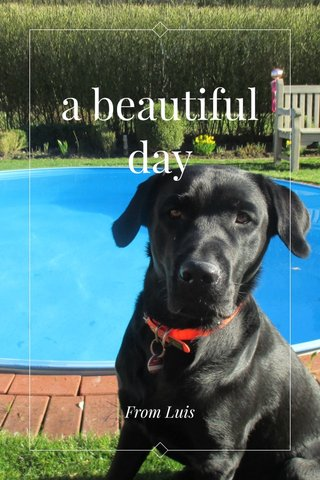 a beautiful day From Luis