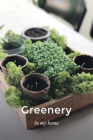 Greenery In my home