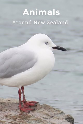 Animals Around New Zealand