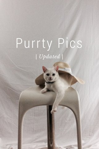 Purrty Pics | Updated |