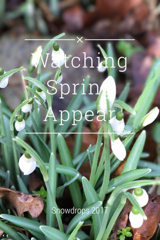 Watching Spring Appear Snowdrops 2017