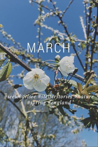 MARCH #seewhatisee #stellerstories #nature #spring #england
