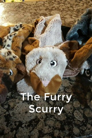 The Furry Scurry