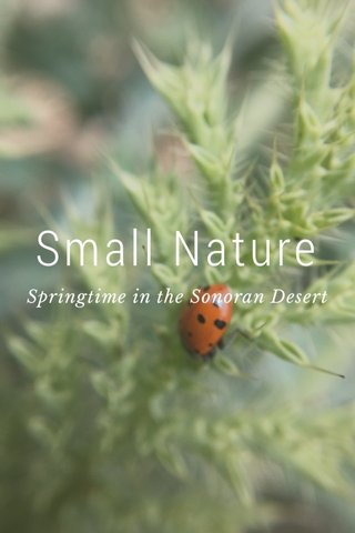 Small Nature Springtime in the Sonoran Desert