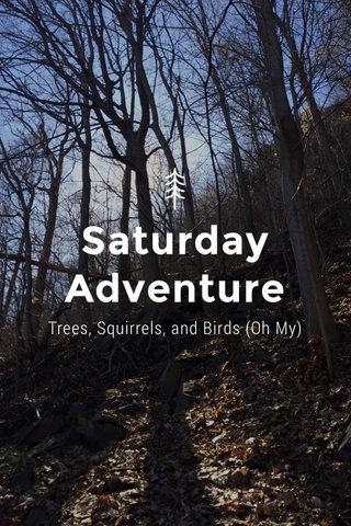 Saturday Adventure Trees, Squirrels, and Birds (Oh My)