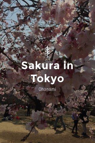 Sakura in Tokyo Ohanami