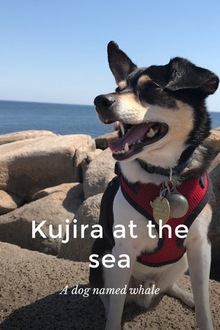 Kujira at the sea A dog named whale