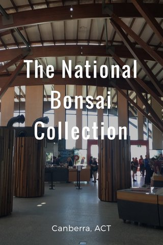 The National Bonsai Collection Canberra, ACT
