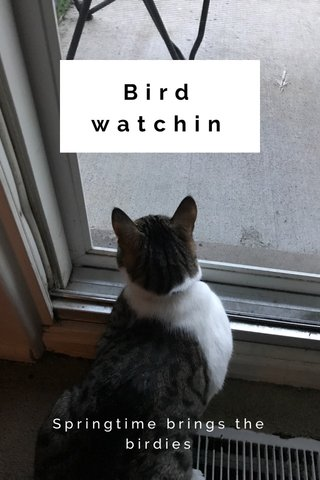 Bird watchin Springtime brings the birdies