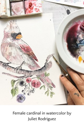 Female cardinal in watercolor by Juliet Rodriguez