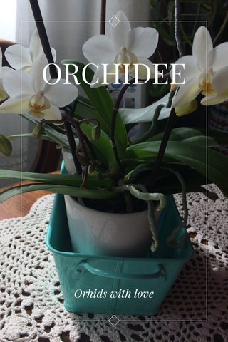 ORCHIDEE Orhids with love