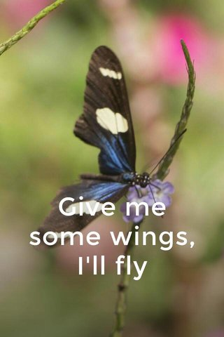 Give me some wings, I'll fly
