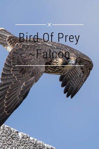 Bird Of Prey ~Falcon