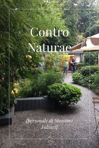 Contro Naturae [personale di Massimo Falsaci]