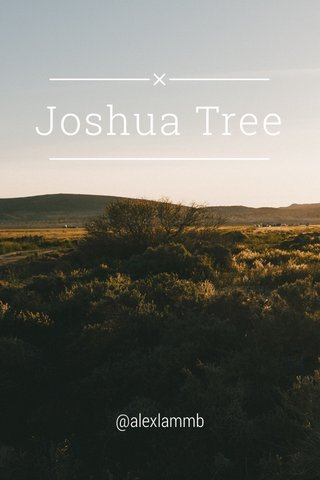 Joshua Tree @alexlammb