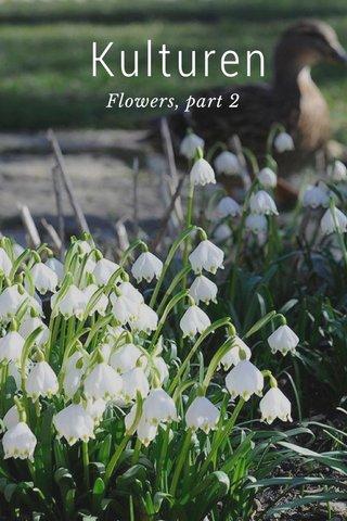 Kulturen Flowers, part 2