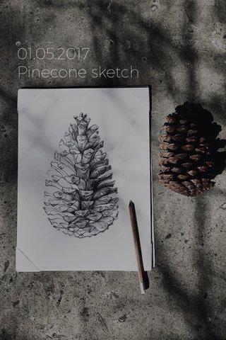 01.05.2017 Pinecone sketch