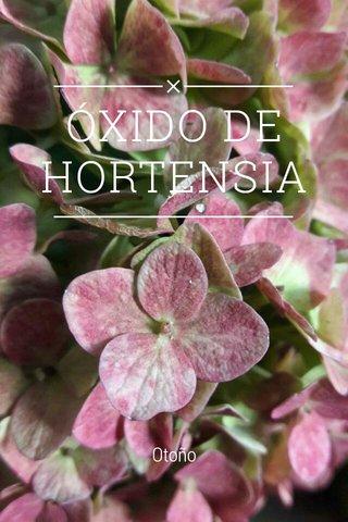 ÓXIDO DE HORTENSIA Otoño