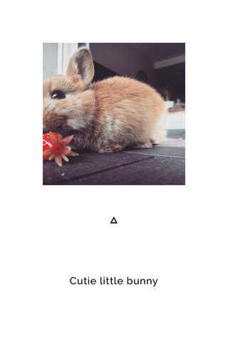 Cutie little bunny