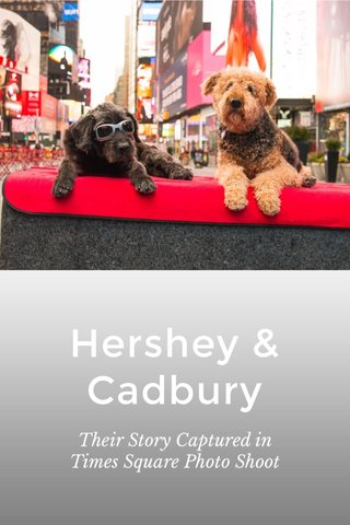 Hershey & Cadbury Their Story Captured in Times Square Photo Shoot