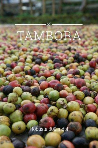 TAMBORA Robusta 800 mdpl