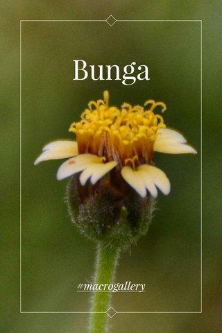 Bunga #macrogallery