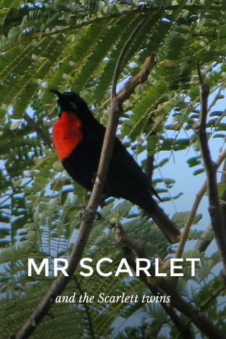 MR SCARLET and the Scarlett twins
