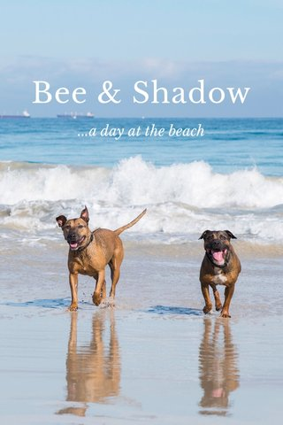 Bee & Shadow ...a day at the beach