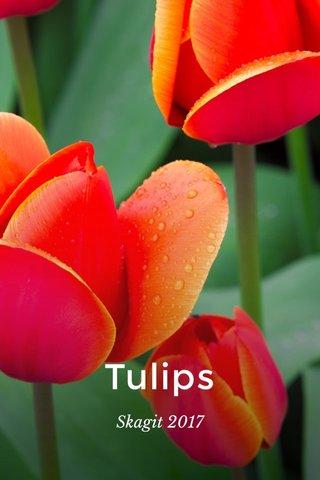 Tulips Skagit 2017