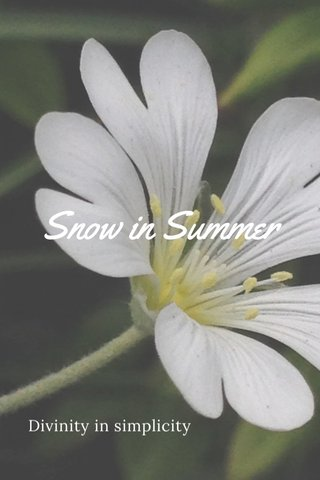 Snow in Summer Divinity in simplicity