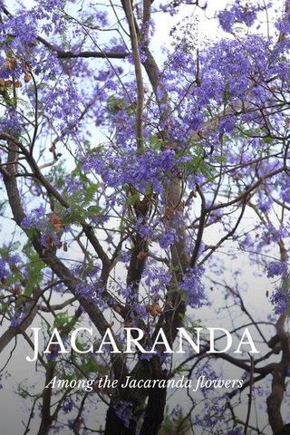 JACARANDA Among the Jacaranda flowers