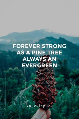 FOREVER STRONG AS A PINE TREE ALWAYS AN EVERGREEN knucklepuck