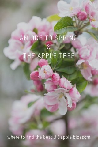 AN ODE TO SPRING & THE APPLE TREE where to find the best UK apple blossom