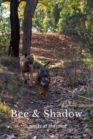 Bee & Shadow ...walks at the creek
