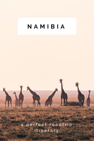 NAMIBIA a perfect roadtrip itinerary