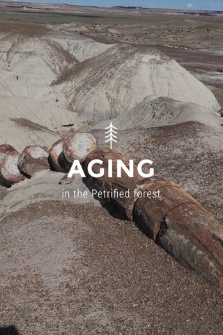 AGING in the Petrified forest