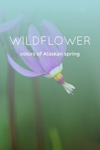 WILDFLOWER colors of Alaskan spring