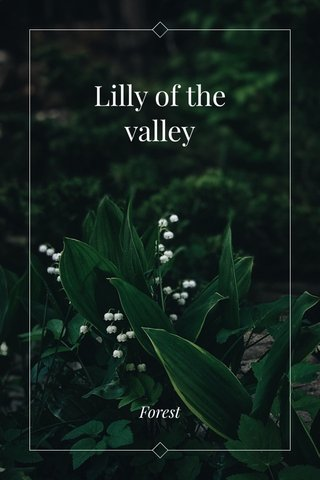 Lilly of the valley Forest