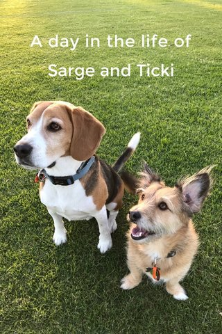 A day in the life of Sarge and Ticki
