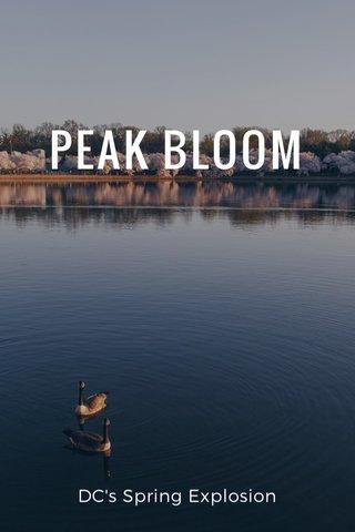 PEAK BLOOM DC's Spring Explosion