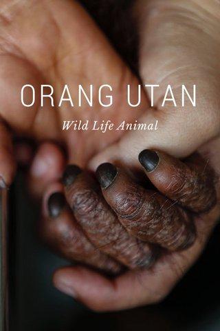 ORANG UTAN Wild Life Animal