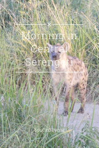 Morning in Central Serengeti Spotted hyena