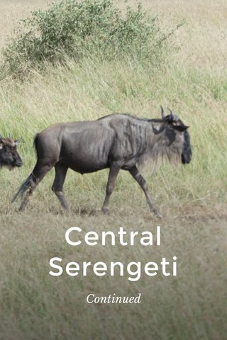 Central Serengeti Continued